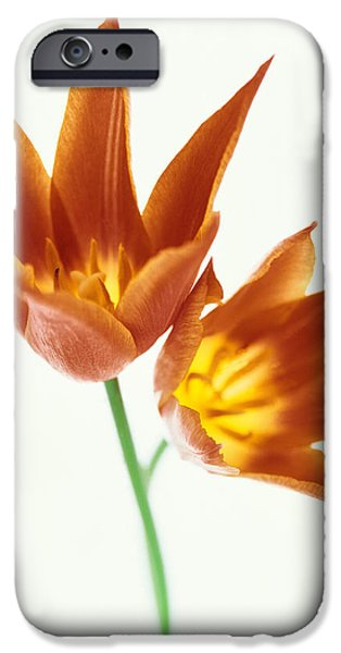 Cut-outs iPhone Cases - Close Up Of Flowers iPhone Case by Panoramic Images