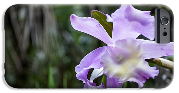 Graphic Design iPhone Cases - Costa Rica Blue Orchid iPhone Case by Michel Rathwell