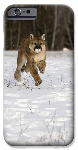 Felis iPhone Cases - Cougar iPhone Case by Linda Freshwaters Arndt