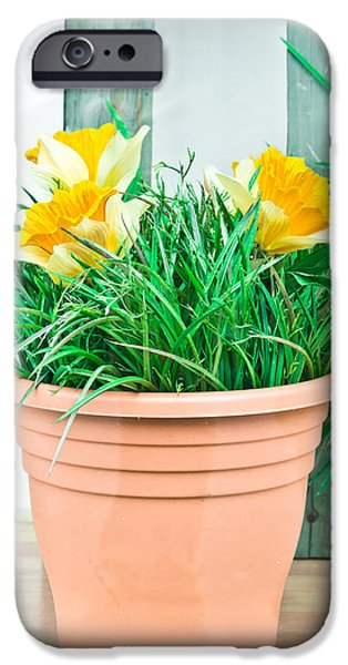Flowerpot iPhone Cases - Daffodils iPhone Case by Tom Gowanlock