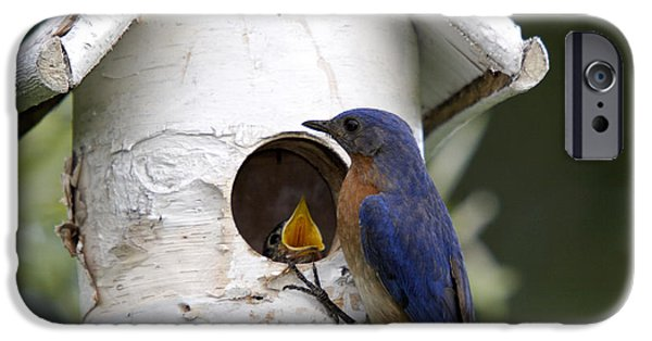 Feeding Young iPhone Cases - Eastern Bluebird iPhone Case by Linda Freshwaters Arndt