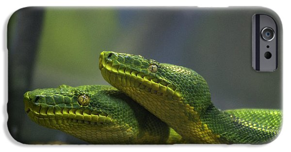 Snake iPhone Cases - Emerald Tree Boa iPhone Case by Mark Newman