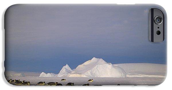 Kemp iPhone Cases - Emperor Penguins Tobogganing Antarctica iPhone Case by Tui De Roy