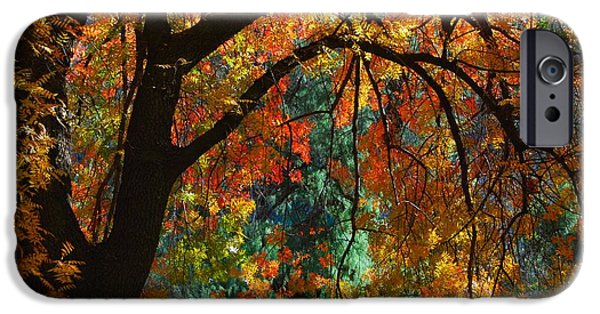 Oak Creek iPhone Cases - Fall Color iPhone Case by Tam Ryan