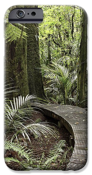Pathways iPhone Cases - Forest boardwalk iPhone Case by Les Cunliffe