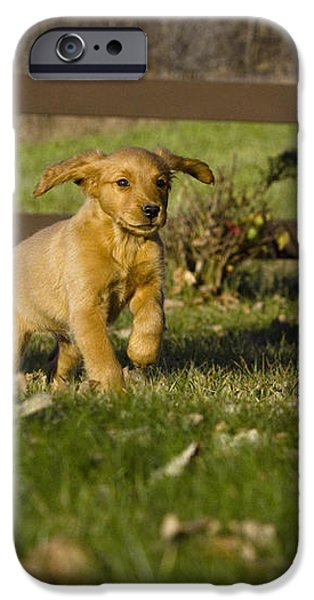 Golden Retriever Pup iPhone Case by Linda Freshwaters Arndt