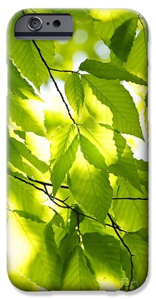 Grow iPhone Cases - Green spring leaves iPhone Case by Elena Elisseeva