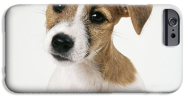 Dog Close-up iPhone Cases - Jack Russell Terrier iPhone Case by John Daniels