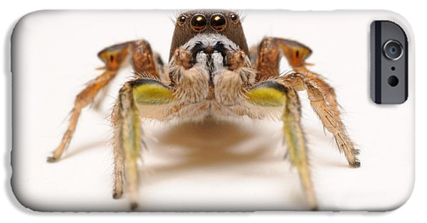 Jumping Spiders iPhone Cases - Jumping Spider iPhone Case by Scott Linstead