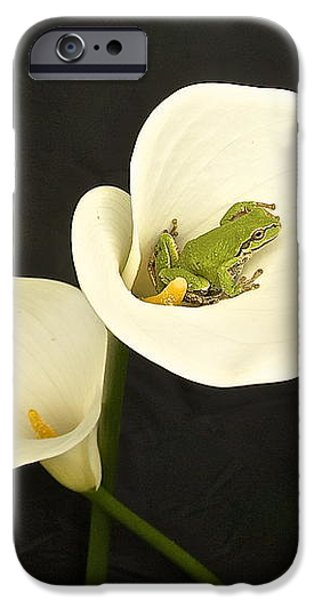 Pacific Tree Frog iPhone Case by Sean Griffin