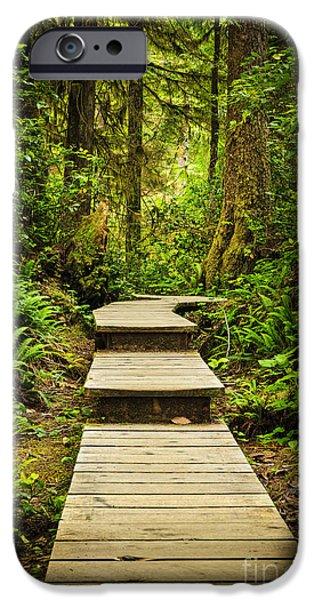 Rainforest iPhone Cases - Path in temperate rainforest iPhone Case by Elena Elisseeva