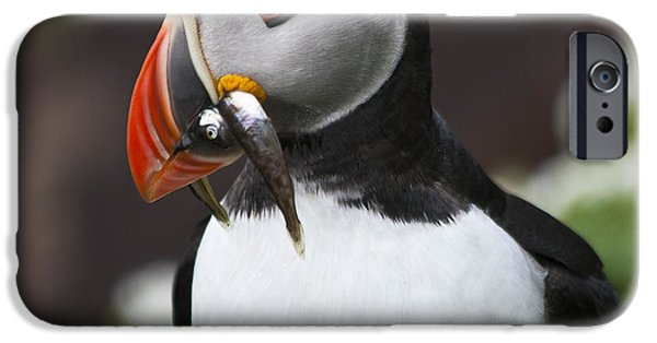 Biologic iPhone Cases - Puffin with fish iPhone Case by Heiko Koehrer-Wagner