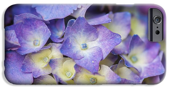 Purple Hydrangeas iPhone Cases - Purple Hydrangea - VanDusen Botanical Garden iPhone Case by May L
