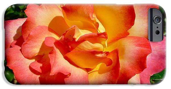 Rose Petal Sorbet iPhone Cases - Rainbow Sorbet Rose iPhone Case by Denise Mazzocco