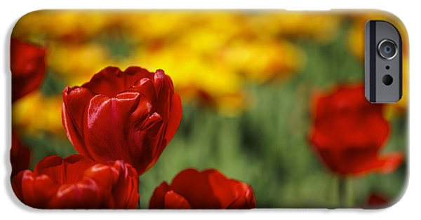 Blossom iPhone Cases - Red and Yellow Tulips iPhone Case by Nailia Schwarz
