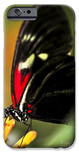 Stamen iPhone Cases - Red heliconius dora butterfly iPhone Case by Elena Elisseeva