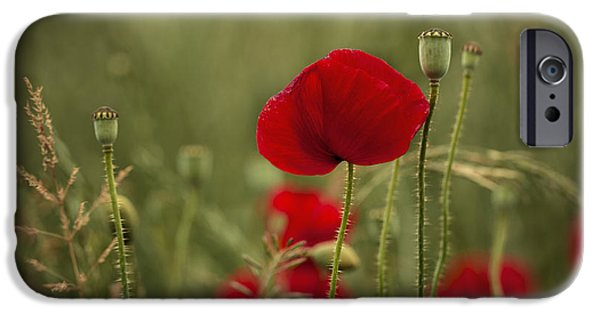 Petals iPhone Cases - Red Poppy Flowers iPhone Case by Nailia Schwarz