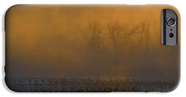 Nebraska iPhone Cases - Sandhill Cranes iPhone Case by Mark Newman