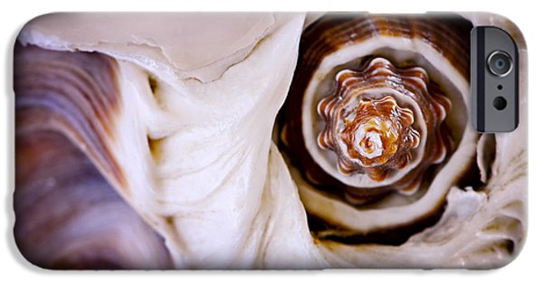 Shell Spiral iPhone Cases - Seashell detail iPhone Case by Elena Elisseeva