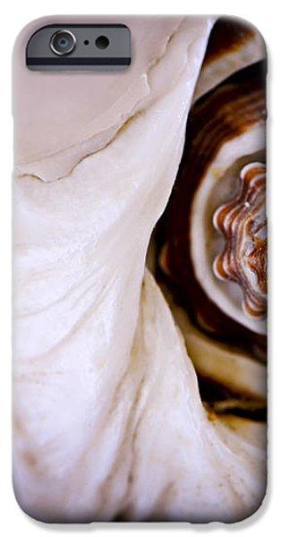 Seashell detail iPhone Case by Elena Elisseeva