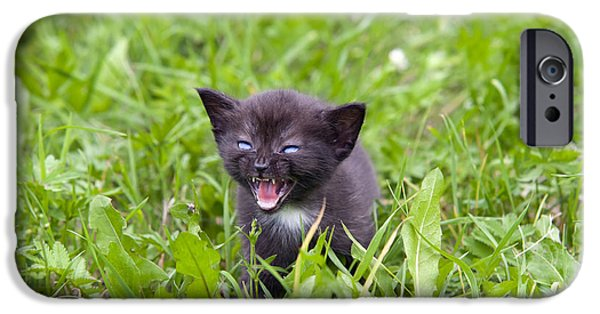 Fury iPhone Cases - Small Kitten In The Grass iPhone Case by Michal Boubin