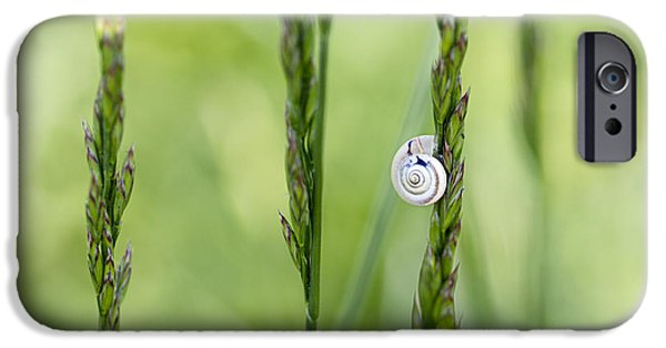 Small iPhone Cases - Snail on Grass iPhone Case by Nailia Schwarz