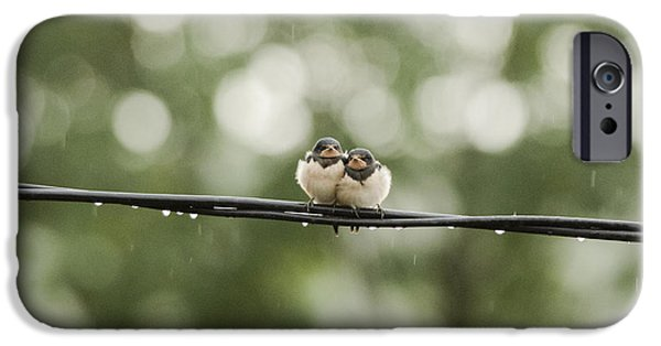 Barn Swallow iPhone Cases - Swallows in the rain iPhone Case by Attila Simon