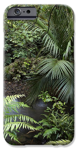 Tropics iPhone Cases - Tropical forest iPhone Case by Les Cunliffe