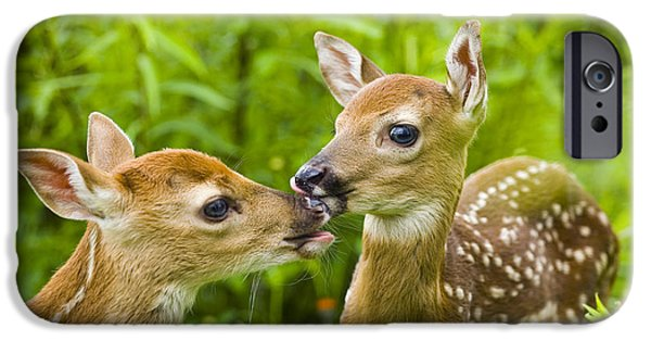 Innocence iPhone Cases - Twin White-tailed Deer Fawns Nuzzling iPhone Case by Michael DeYoung