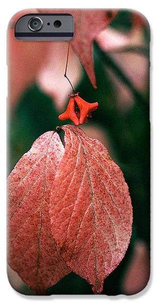 Leaf Change iPhone Cases - Ussurian taiga Autumn iPhone Case by Anonymous