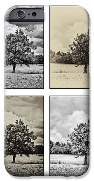 Rainy Day iPhone Cases - 4-Way Tree on white iPhone Case by Greg Jackson