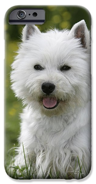 Dog Close-up iPhone Cases - West Highland White Terrier iPhone Case by Rolf Kopfle