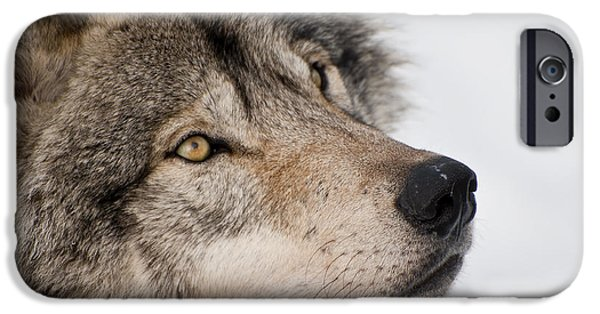 Dogs iPhone Cases - Timber Wolf Pictures iPhone Case by Wolves Only