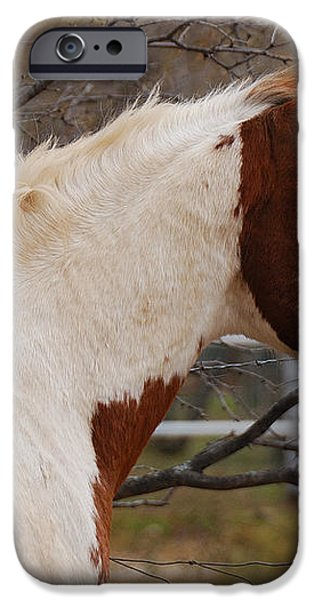 Paint Stallion iPhone Case by Thea Wolff