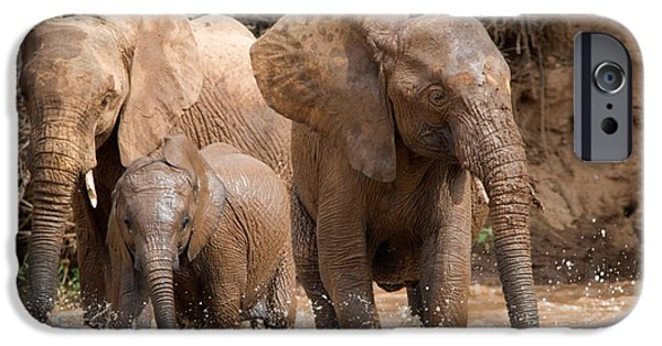 Elephants iPhone Cases - African Elephants Loxodonta Africana iPhone Case by Panoramic Images