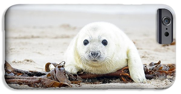 Puppies iPhone Cases - Baby Grey Seal relaxing on the beach iPhone Case by Manon Manuel