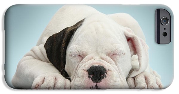 Boxer Puppy iPhone Cases - Boxer Puppy iPhone Case by Mark Taylor