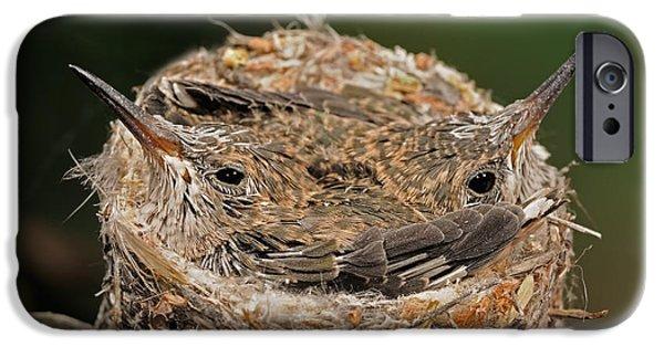 Baby Bird iPhone Cases - Broad Billed Hummingbird iPhone Case by Scott Linstead