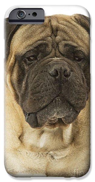 Dog Close-up iPhone Cases - Bullmastiff Dog iPhone Case by Jean-Michel Labat