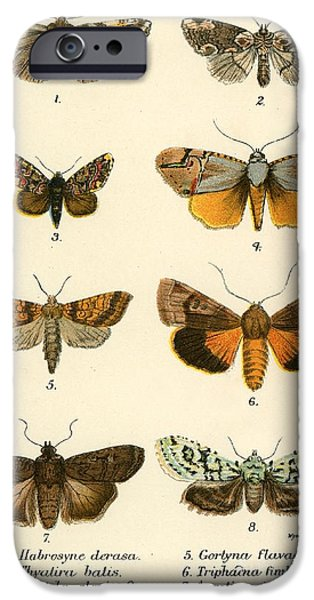 Science Paintings iPhone Cases - Butterflies iPhone Case by English School