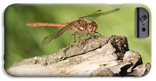 Fauna iPhone Cases - Common Darter Dragonfly iPhone Case by Robert Carr