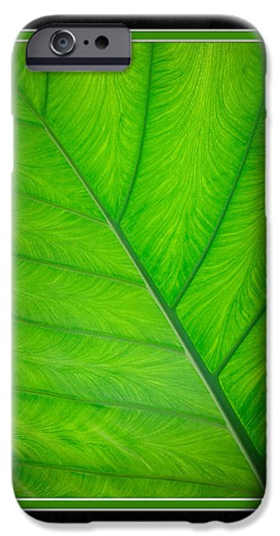 Matting iPhone Cases - Elephant Ear Leaf Close-Up iPhone Case by Charles Feagans
