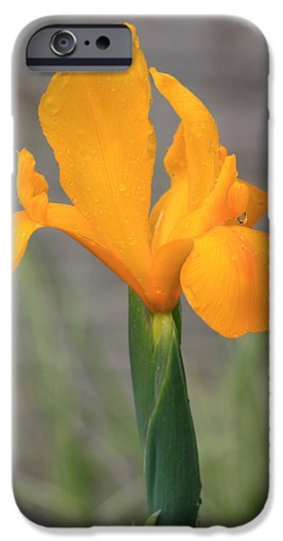 Rainy Day iPhone Cases - Golden Rain iPhone Case by Suzanne Gaff