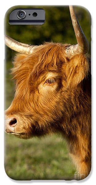 Highland Cow iPhone Case by Brian Jannsen
