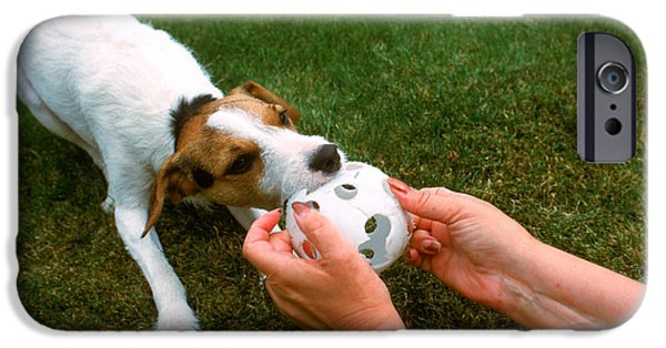 Dog Playing Ball iPhone Cases - Jack Russell Terrier iPhone Case by Jim Corwin