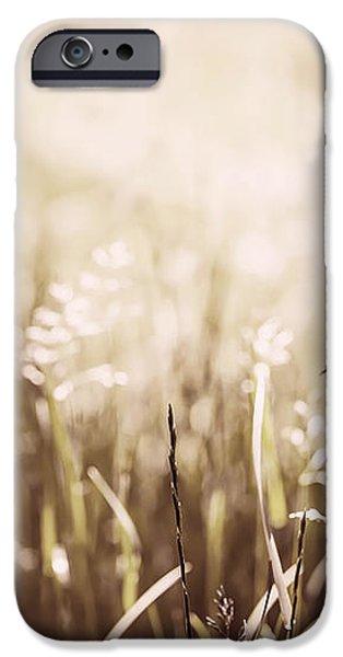 June grass flowering iPhone Case by Elena Elisseeva