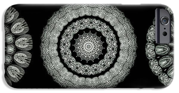 Monotone iPhone Cases - Kaleidoscope Ernst Haeckl Sea Life Series Black and White Set On iPhone Case by Amy Cicconi