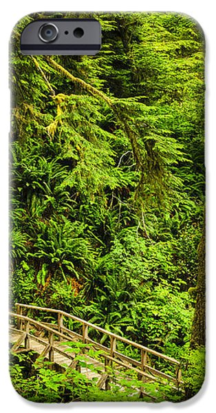 Path in temperate rainforest iPhone Case by Elena Elisseeva