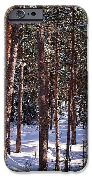 Pines iPhone Cases - Pine forest iPhone Case by Jouko Lehto