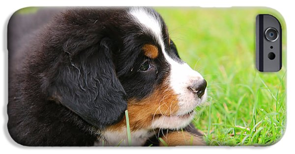 Cute Puppy iPhone Cases - Portrait of Bernese mountain dog iPhone Case by Michal Bednarek